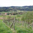 Weinbau Spari_18